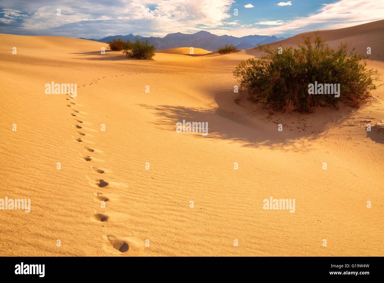 Empreintes de pas sur le sable dans le désert Banque D'Images