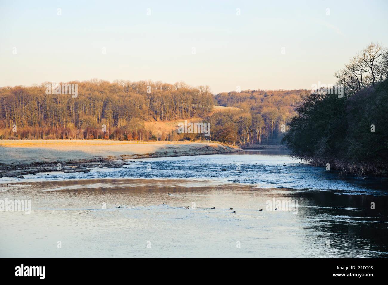 Frosty matin sur la rivière Ribble par Marles Bois près de Ribchester Lancashire England Photo Stock
