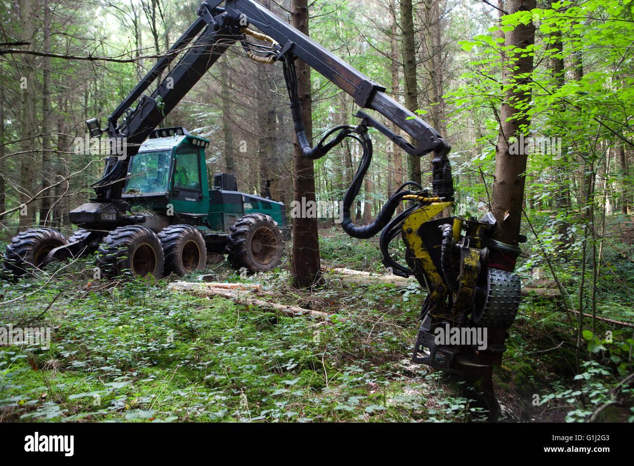 Forêt de Dean, Gloucestershire. Une récolteuse à travailler dans une ...