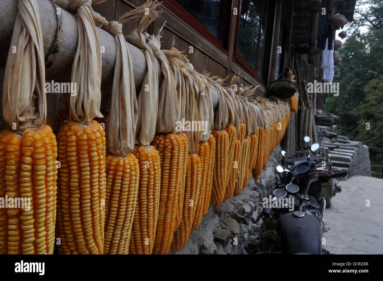 Le séchage du maïs d'automne dans la région de Ping'an, Guangxi, Chine Photo Stock