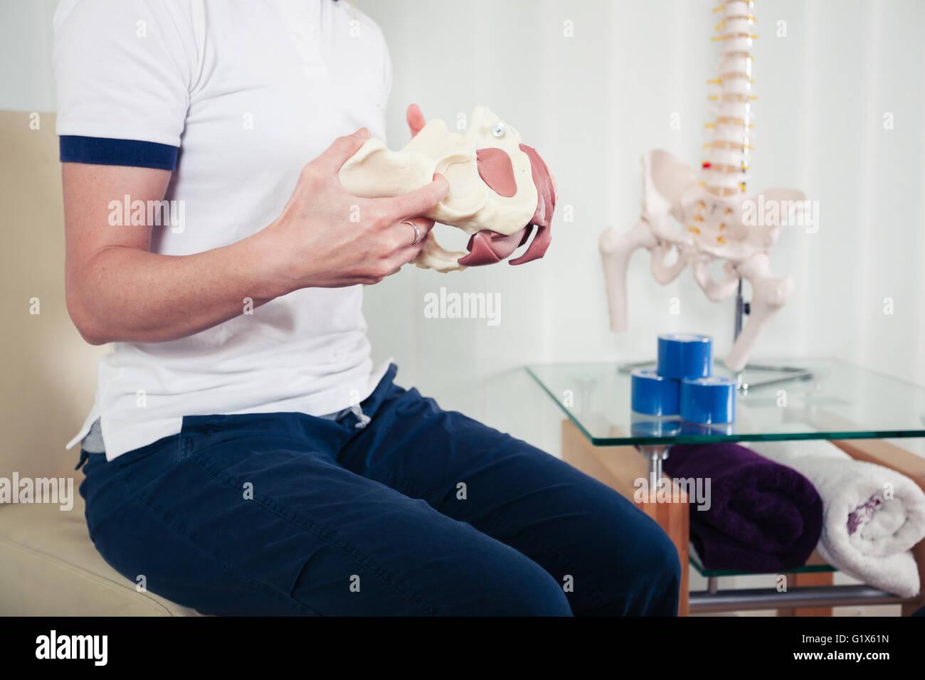 Un physiothérapeute est titulaire d'un modèle d'un bassin humain Photo Stock