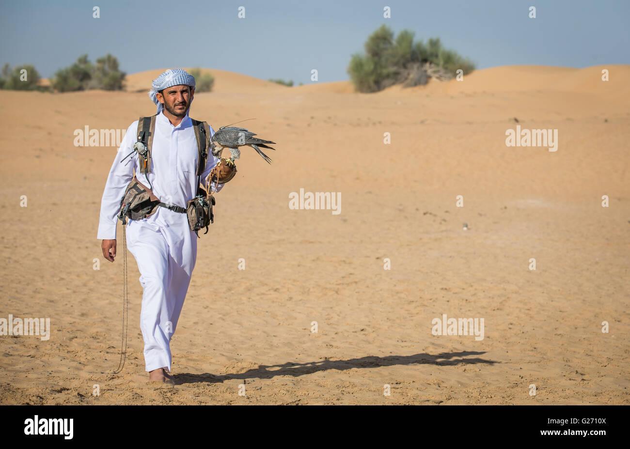 L'homme arabe marche dans un désert près de Dubaï avec le faucon pèlerin sur sa main Photo Stock