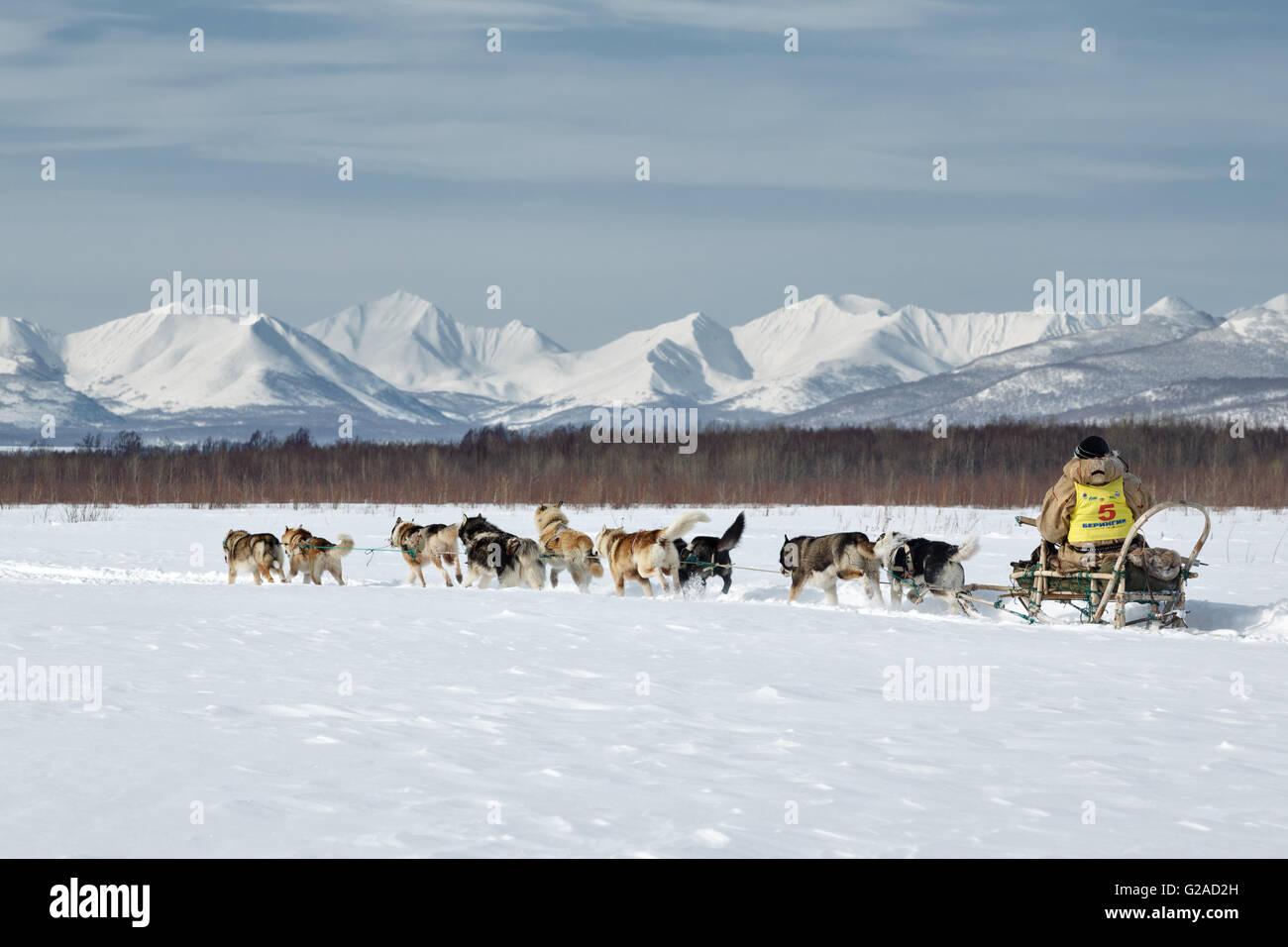 L'équipe de chien de traîneau musher Kamchatka Ivan Nivani fonctionne sur un fond de montagnes. Course de traîneaux Banque D'Images