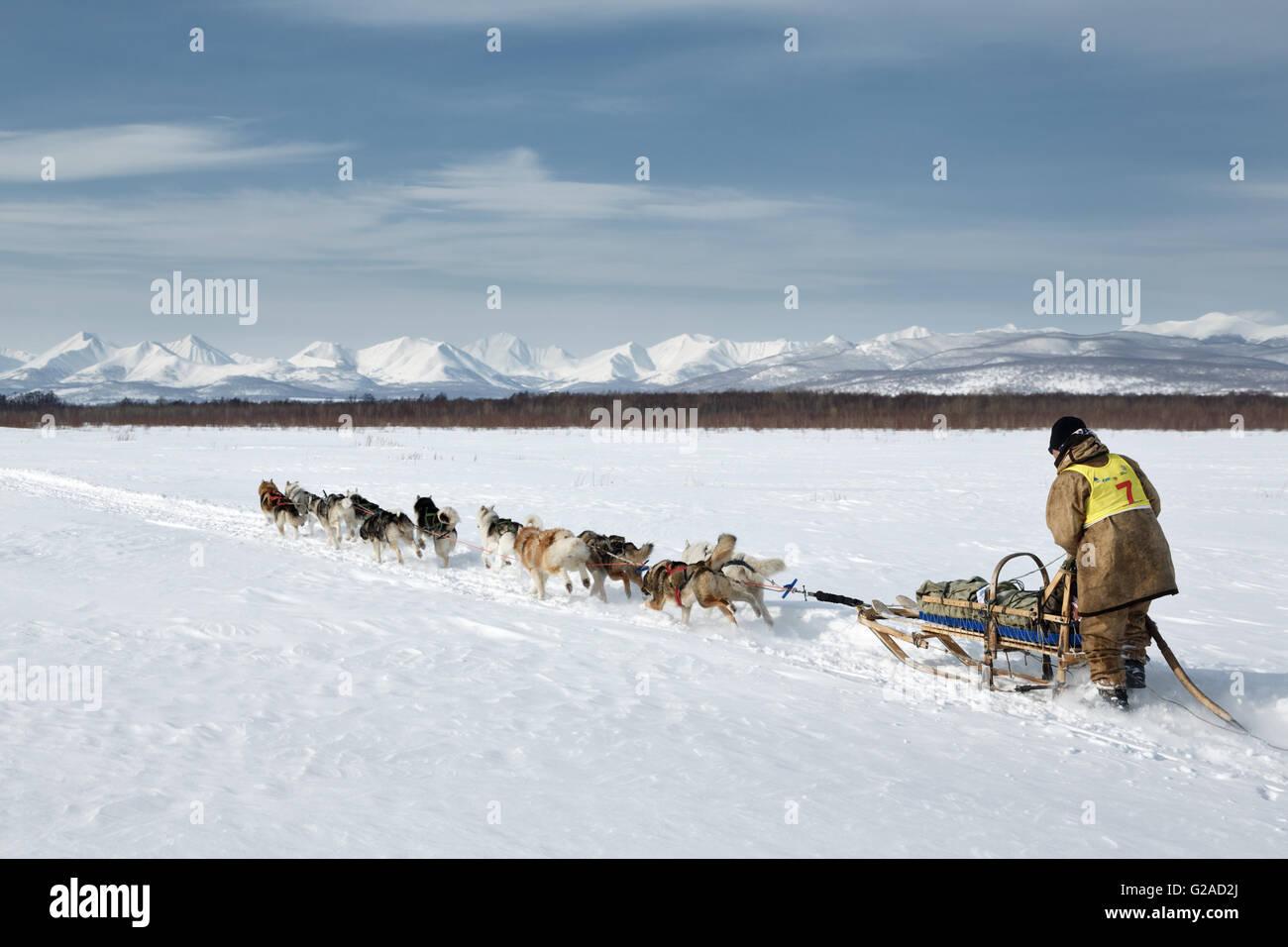 L'équipe de chien de traîneau musher Chuprin Valery fonctionne sur un arrière-plan des montagnes. Course de chiens Banque D'Images