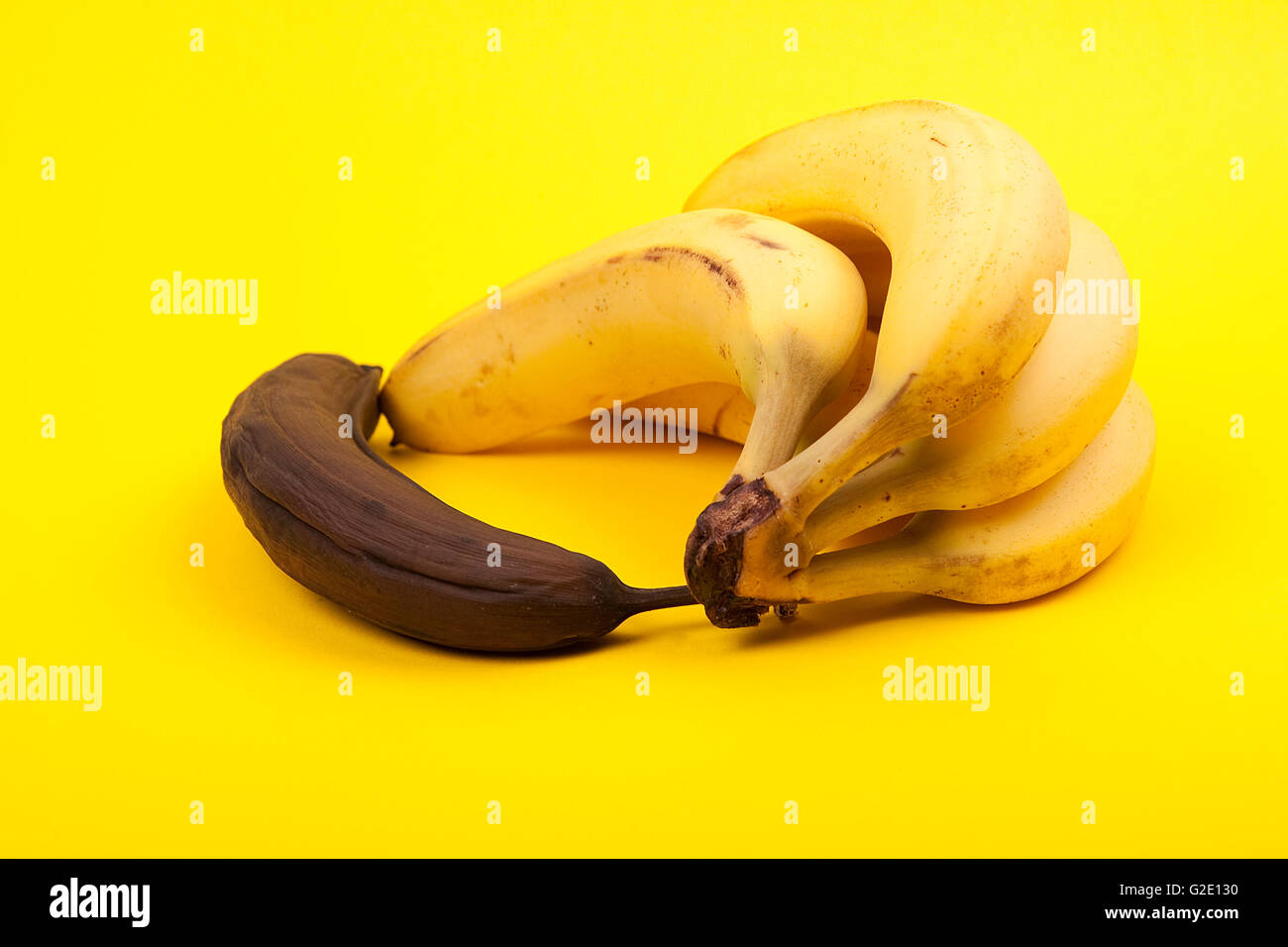 Banane pourrie noir à côté de tas de bananes mûres sur fond jaune Banque D'Images