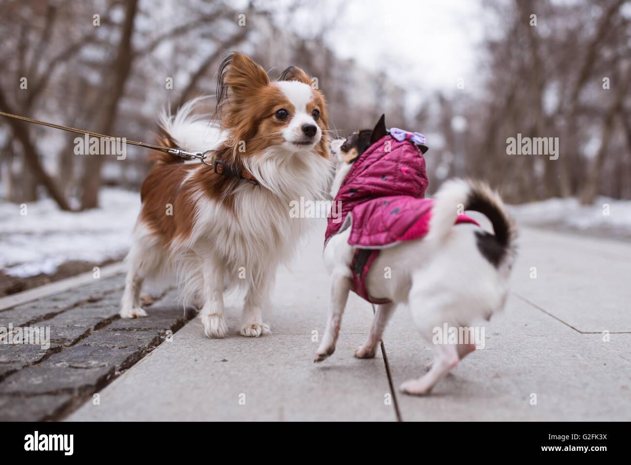 Deux Chiens Droles Renifle Les Uns Les Autres Photo Stock Alamy