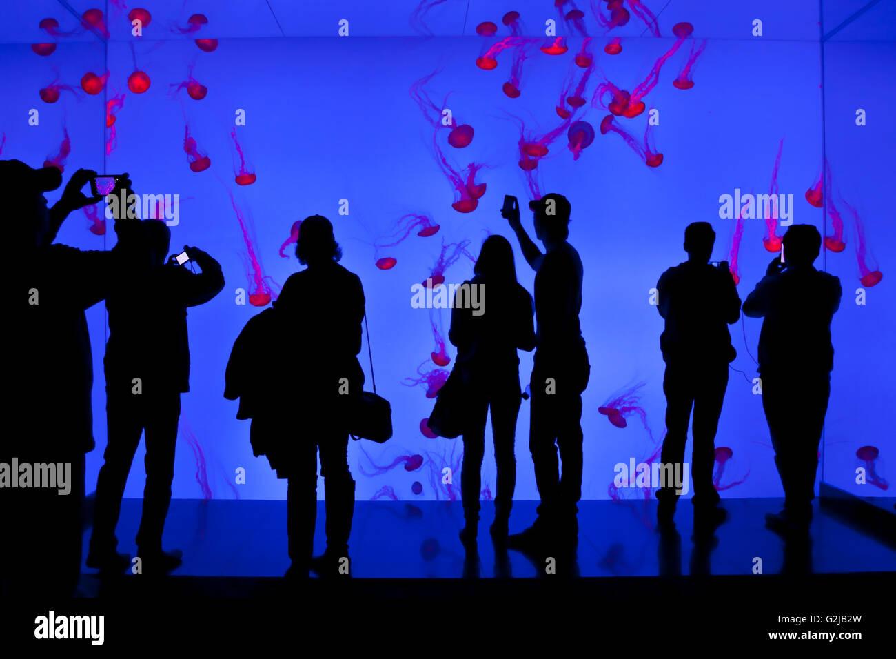 Les visiteurs (voir photographie et smartphones) méduses dans Planète gelées Gallery Riply's Photo Stock