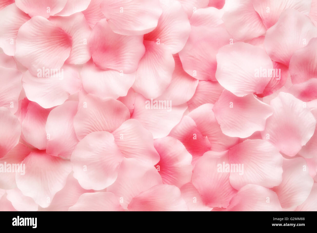 Belle rose pétale de rose délicate texture d'arrière-plan Photo Stock