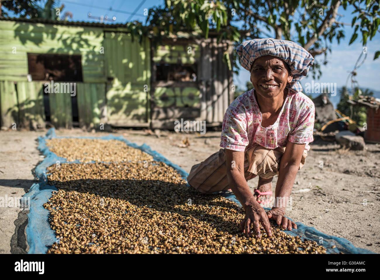 Femme Indonsienne Le Tri Des Grains De Caf Danau Toba Lac Sumatra Du Nord Indonsie Asie Sud