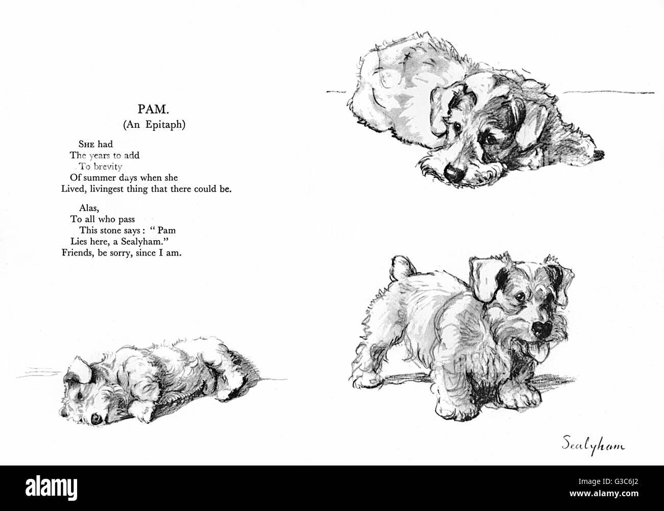 Trois illustrations d'un Sealyham Terrier (Pam) par Cecil Aldin, avec une épitaphe poétique par Patrick Photo Stock
