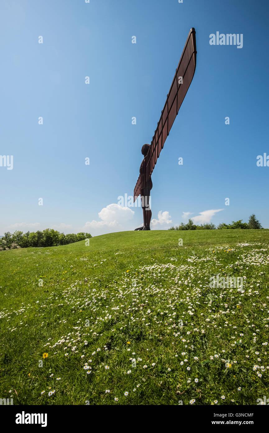 Ange du Nord Photo Stock