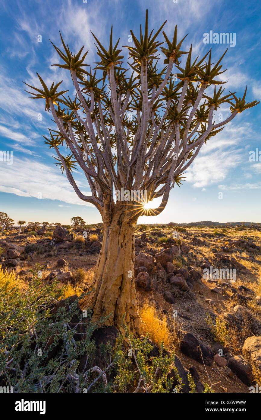 La forêt Quiver Tree (Kokerboom Woud en Afrikaans) est une forêt et une attraction touristique du sud Photo Stock