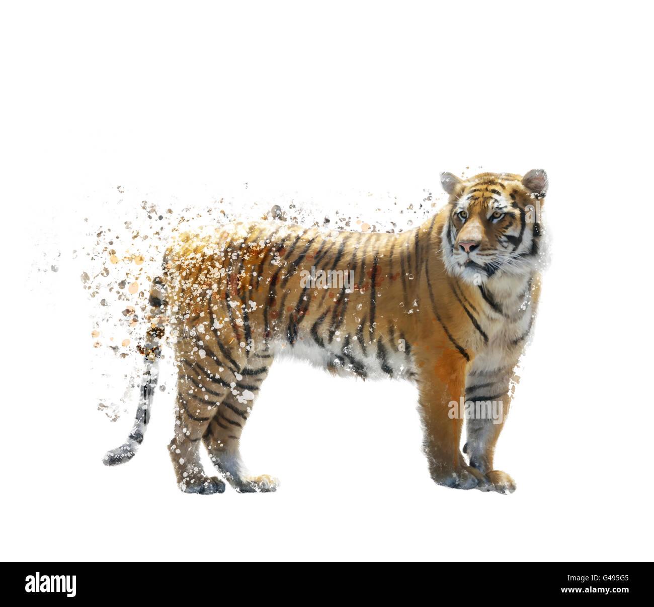 Peinture numérique de tigre sur fond blanc Photo Stock