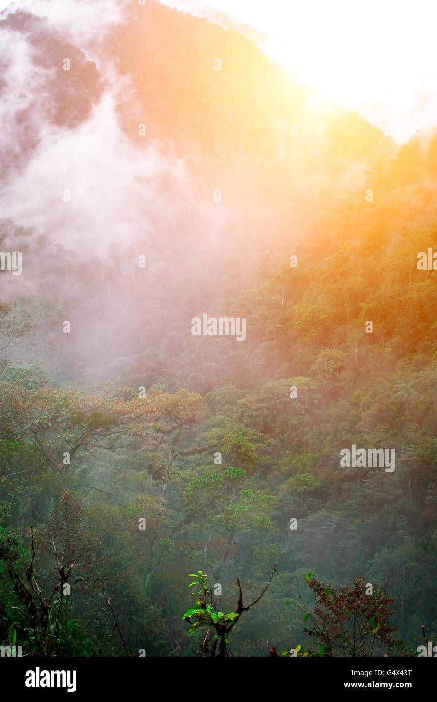 Forêt amazonienne. L'Équateur Photo Stock