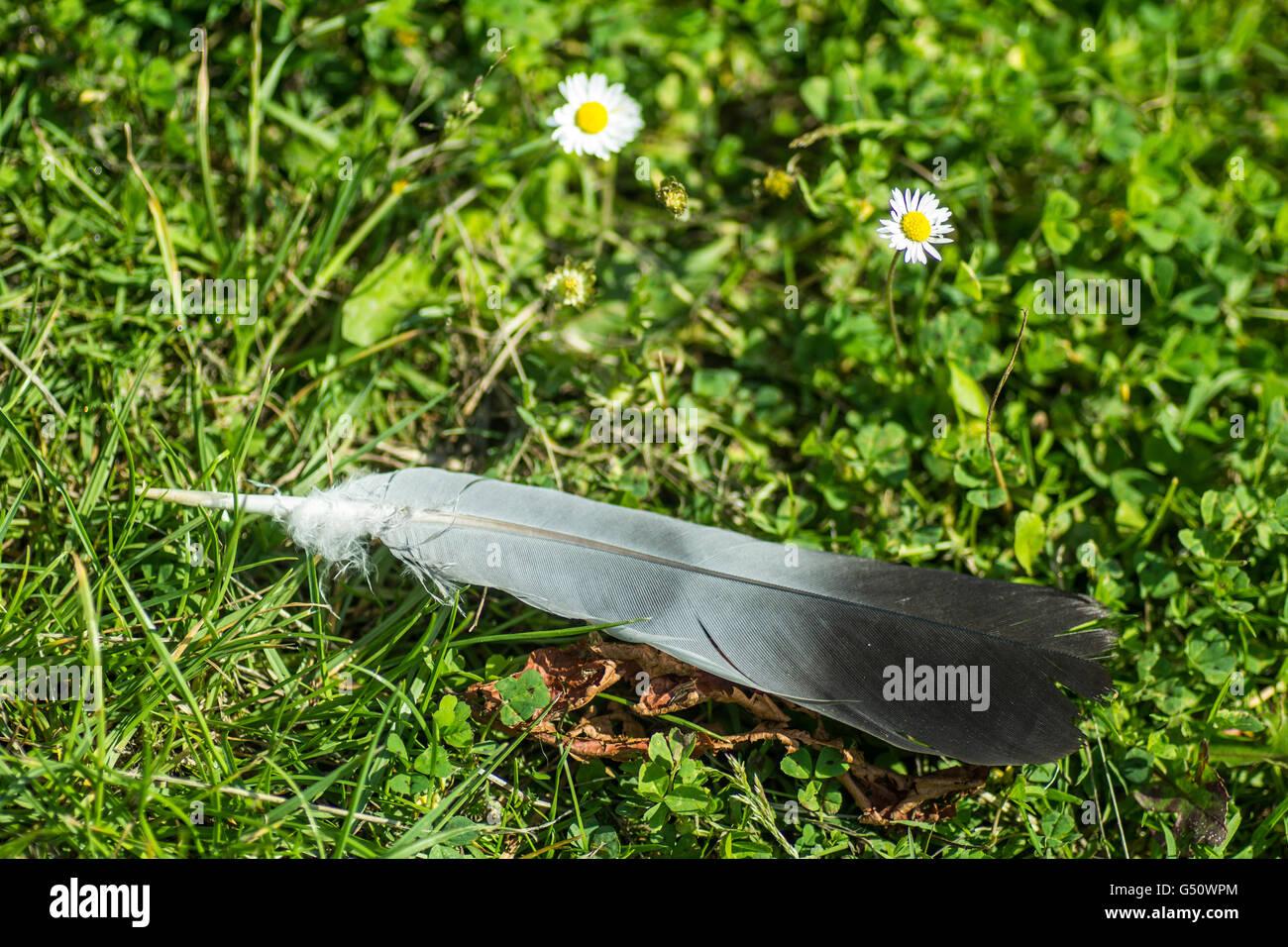 Seul oiseau plume sur l'herbe Photo Stock
