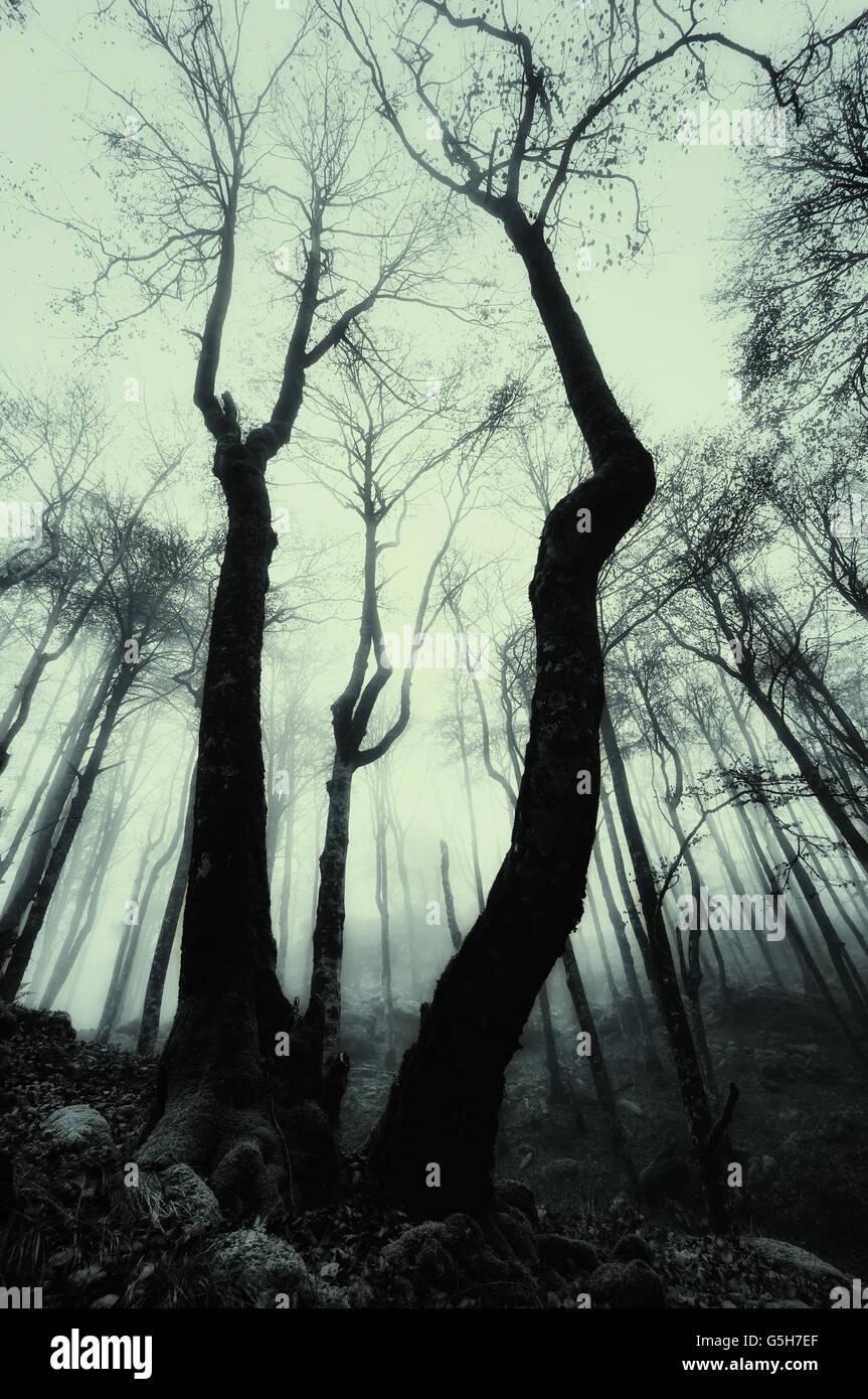 Forêt brumeuse effrayant avec ton monochrome Photo Stock
