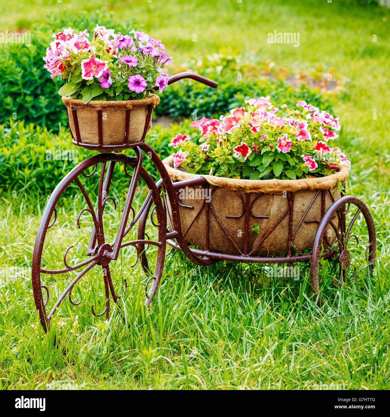Modèle de décoration Vintage vieux vélo équipé dans le panier de ...