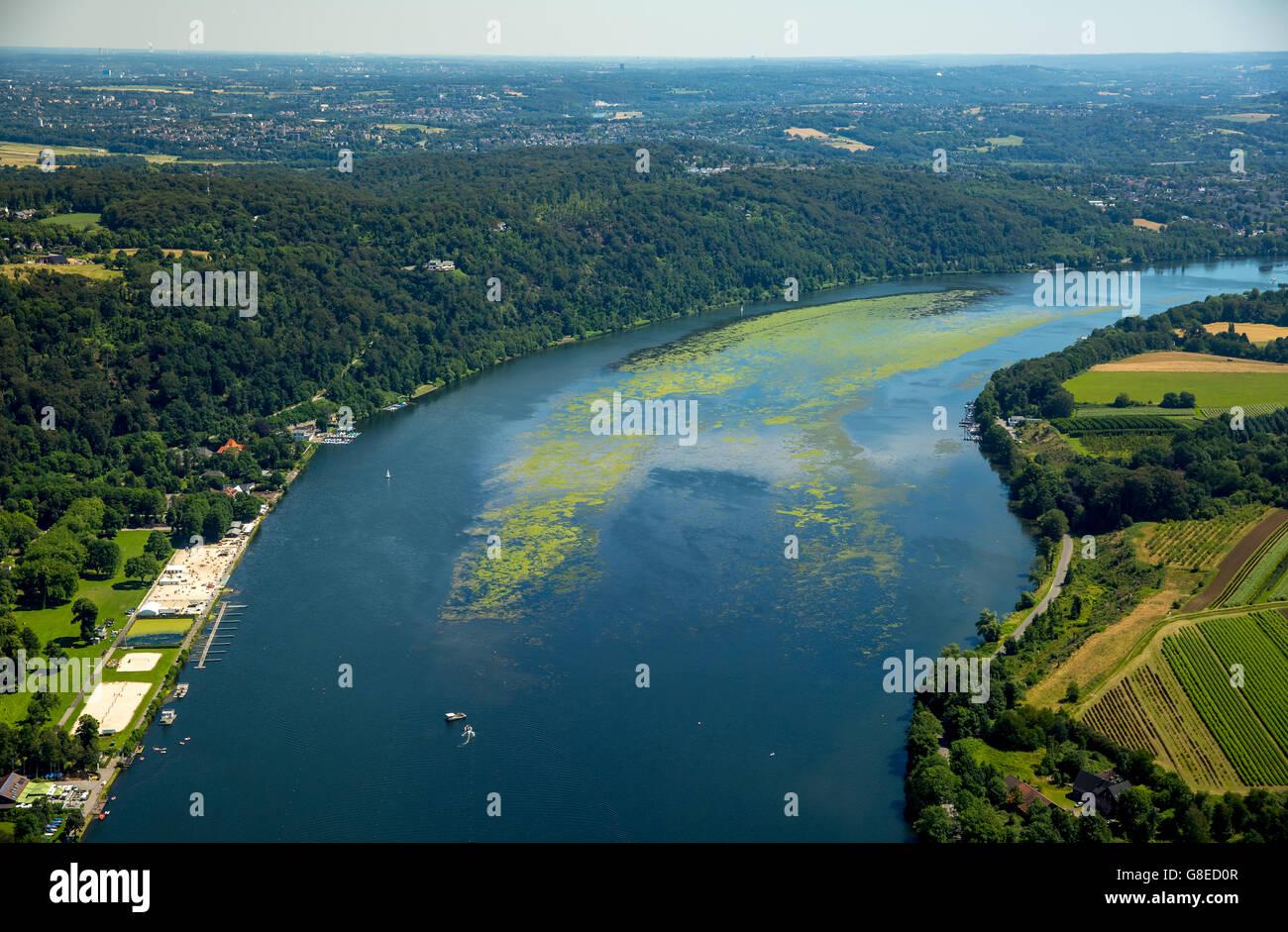 Vue aérienne, l'élodée de nouveau l'Elodea à Essen Baldeneysee, le fauchage de bateau, Photo Stock