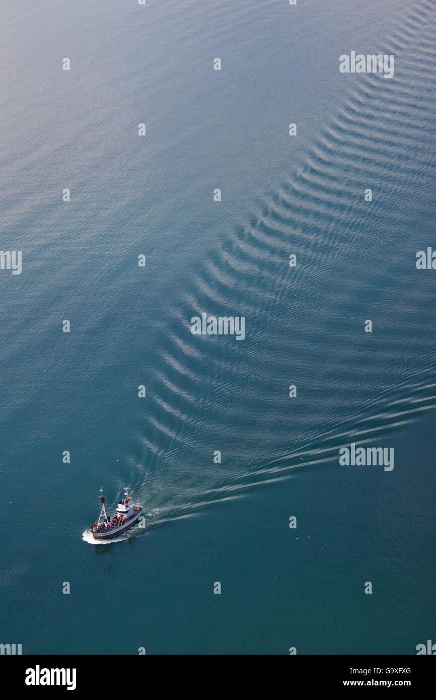 Des baleines aériennes, Skjafandi bateau Bay, l'Islande, juin 2009. Photo Stock