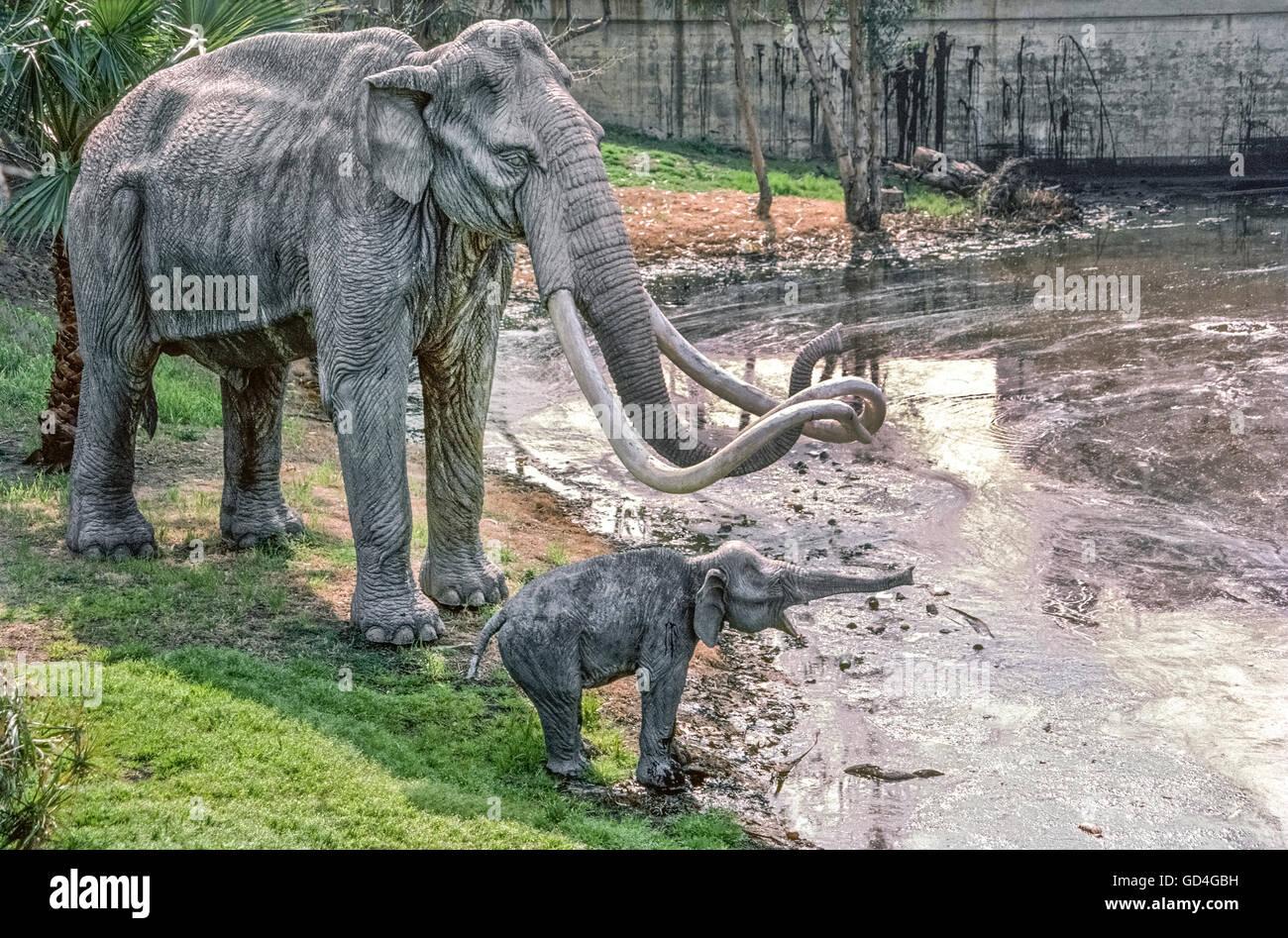 Les modèles en fibre de verre grandeur nature d'une mère et bébé mammouth de l'époque Photo Stock