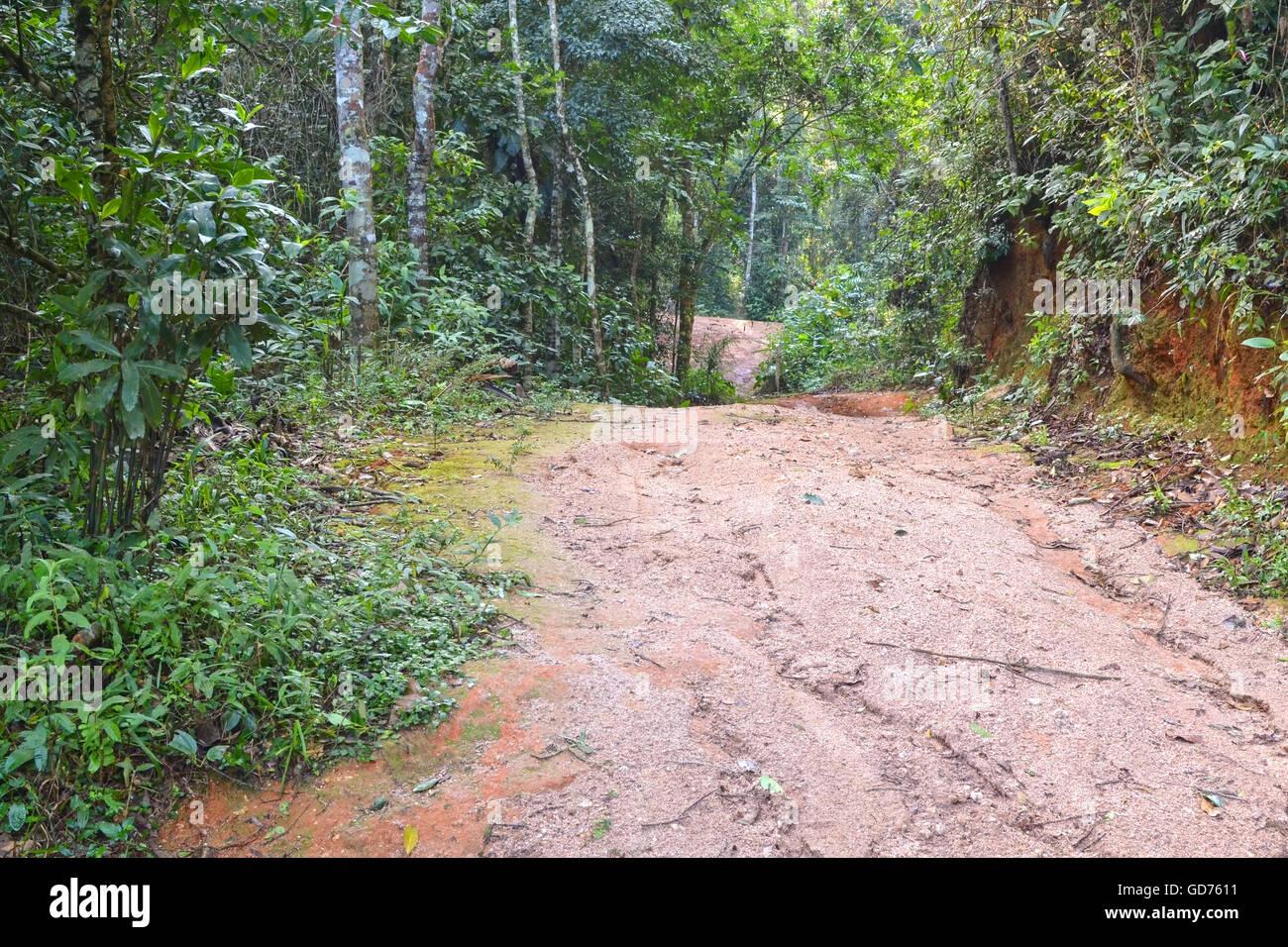 Une route de terre à Itaipava, Petropolis, Brésil, montrant des signes d'érosion Photo Stock