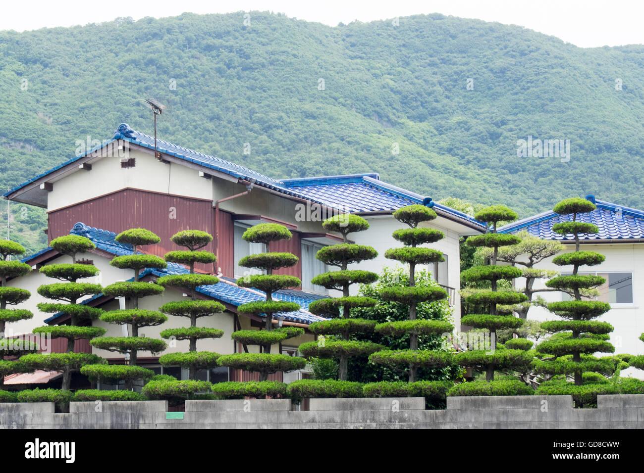 Les arbres bien entretenus à côté de Shikoku au Japon. Photo Stock