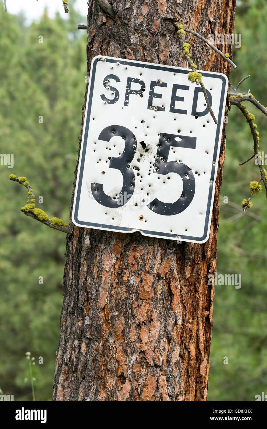Signe de la limite de vitesse avec trous de balle sur un pin de l'Oregon dans la vallée de Wallowa. Photo Stock