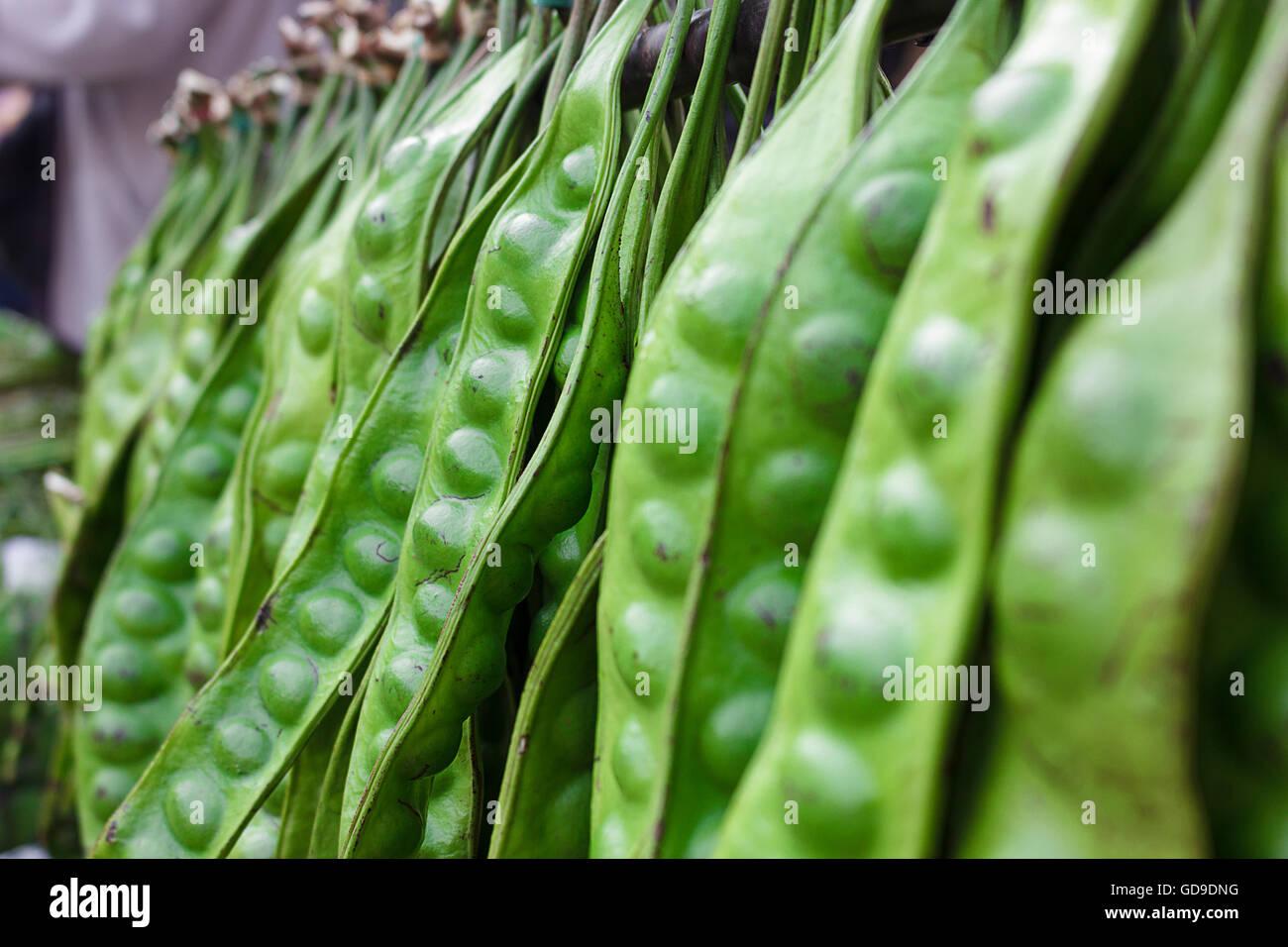 Sato est une plante utilisée comme ingrédients alimentaires du sud de la Thaïlande a un odeur âcre Photo Stock