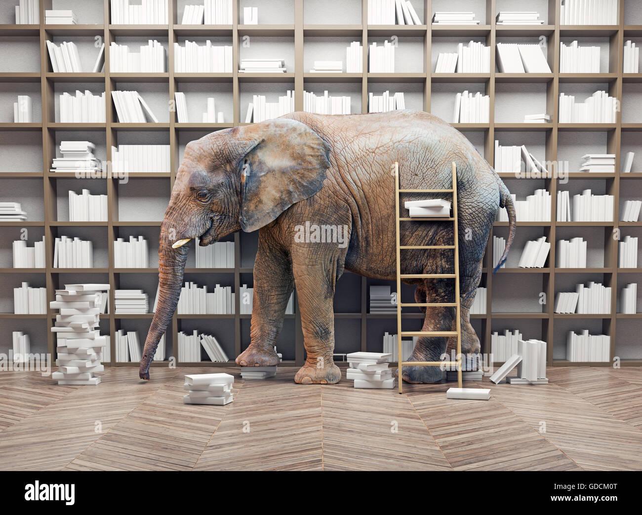 Un éléphant dans la pièce avec des étagères. Concept créatif Photo Stock