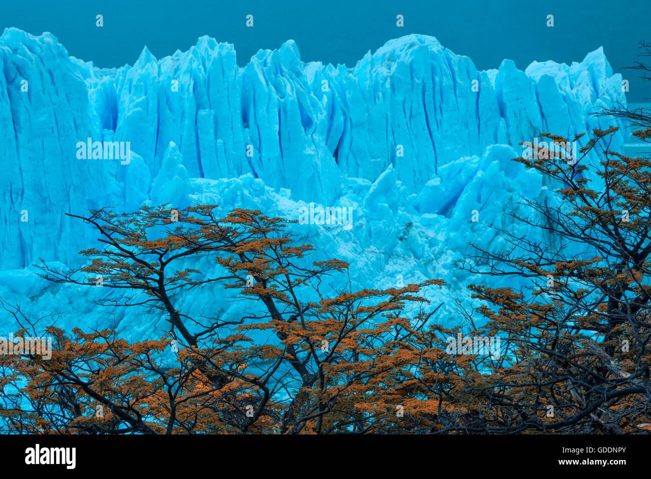 L'Amérique du Sud Argentine Patagonie,,Santa Cruz, El Calafate, le Parc National Los Glaciares, le Perito Photo Stock
