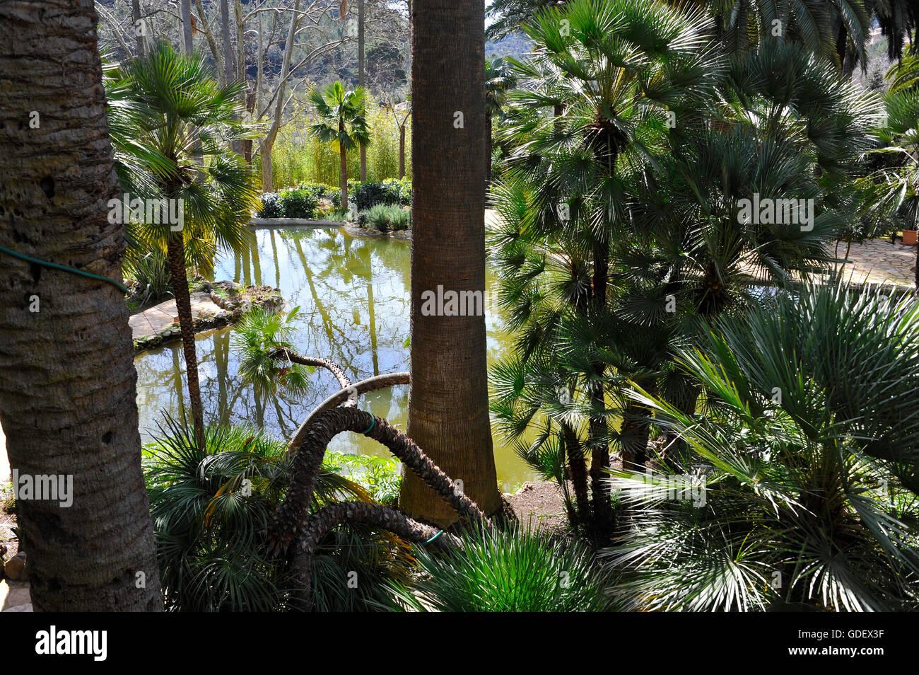Jardin Arabe Jardins Dalfabia Bunyola Majorque Espagne Banque - Jardin-arabe