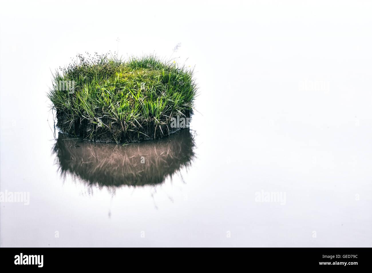 Un peu d'herbe dans un étang de l'île Banque D'Images