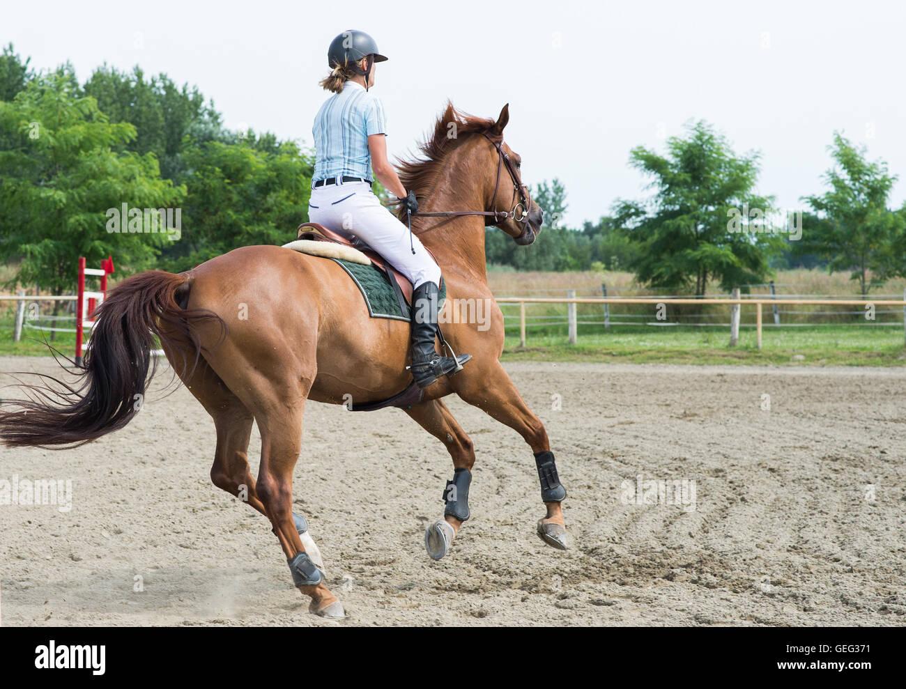 Sports équestres, saut à cheval, équitation, cso Photo Stock