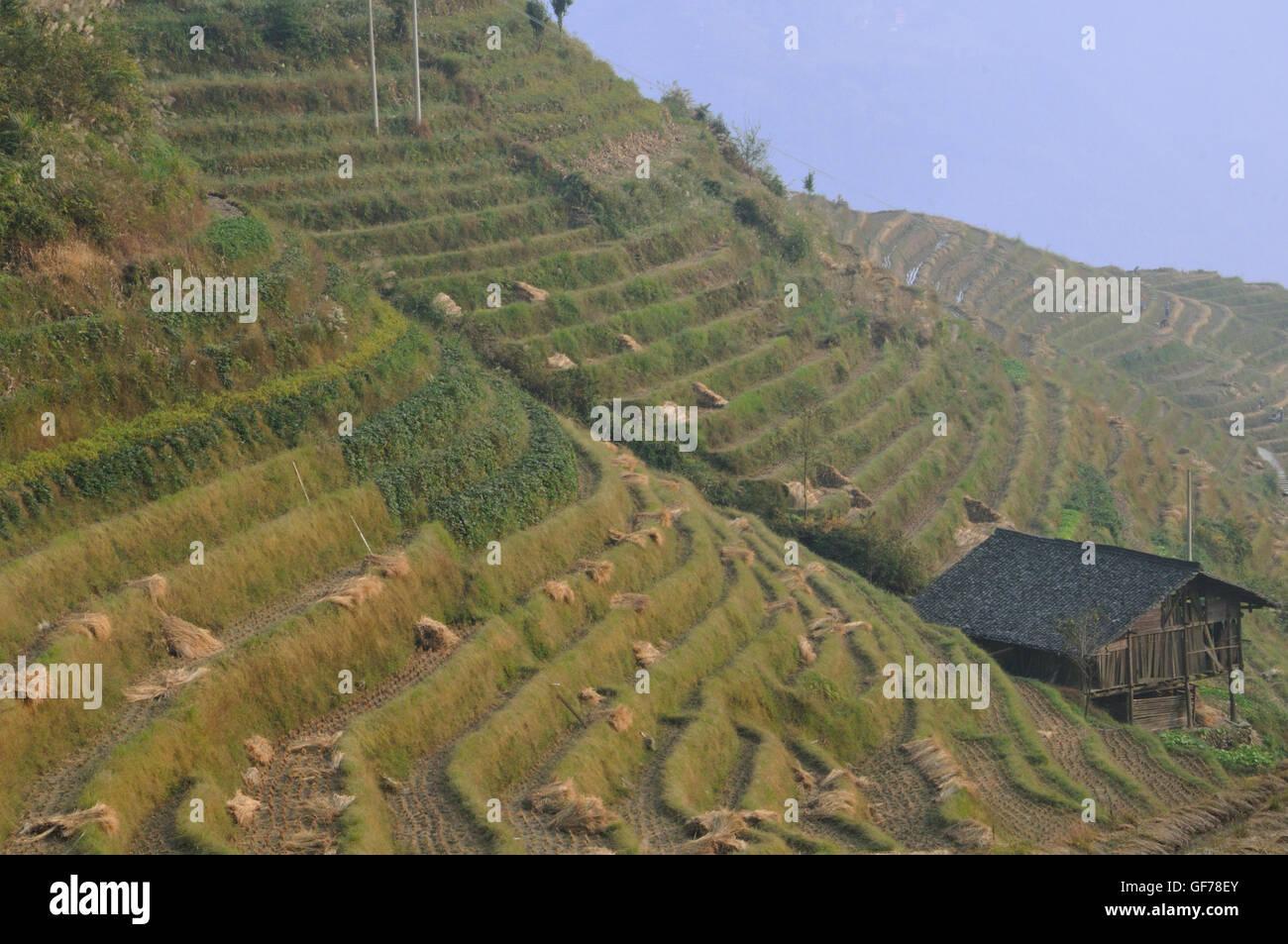 Terrasses de Ping'an, Longsheng, Guangxi, Chine en automne Photo Stock