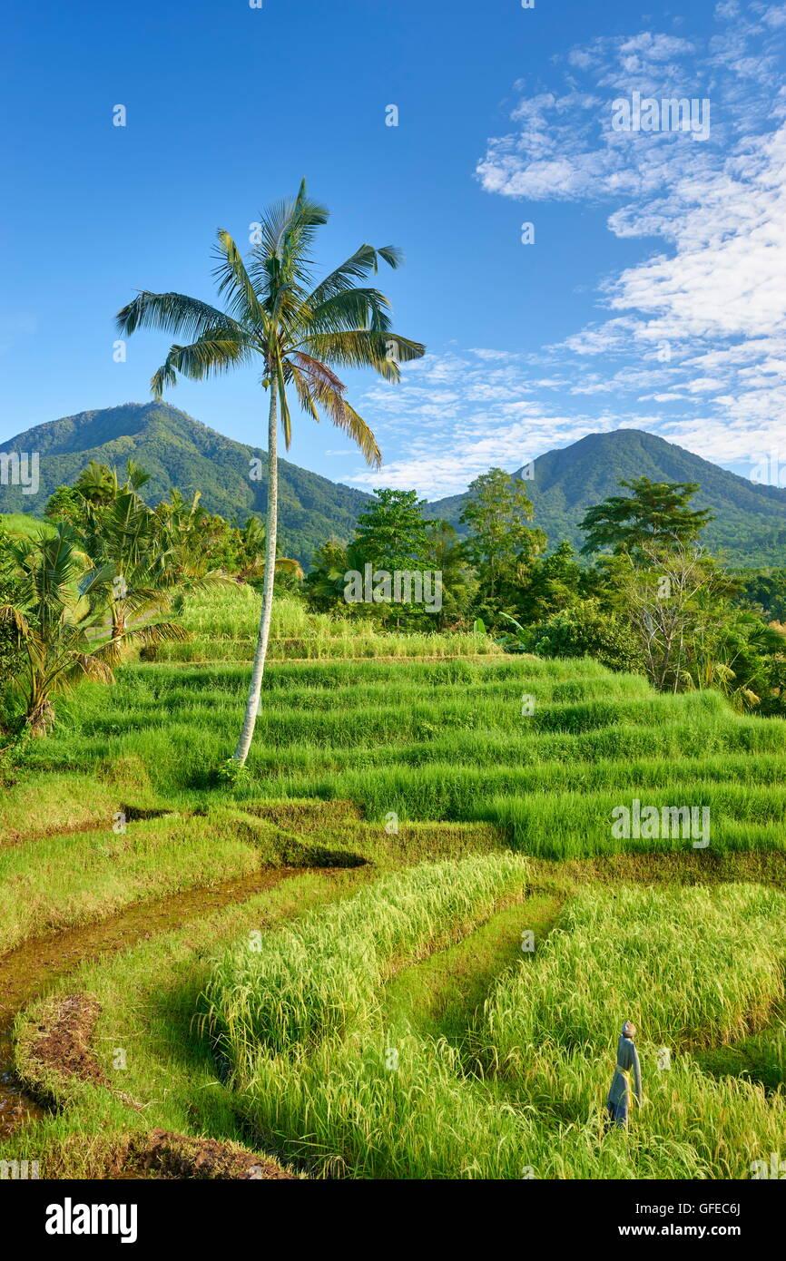 Rizières en terrasses de Jatiluwih, Bali , Indonésie Photo Stock