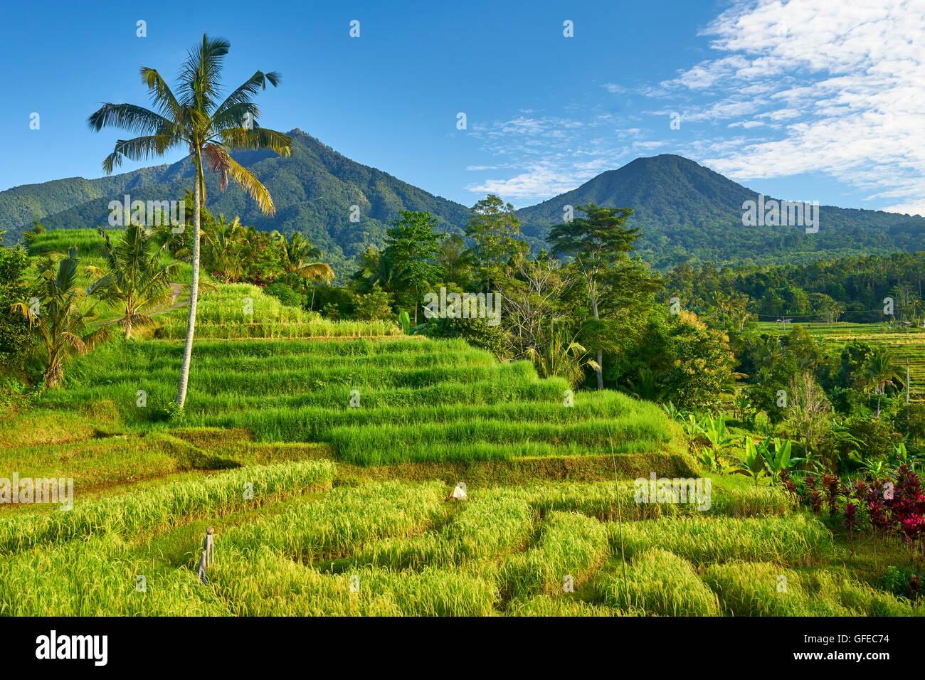 Terrasses des rizières de Jatiluwih, Bali, Indonésie Photo Stock