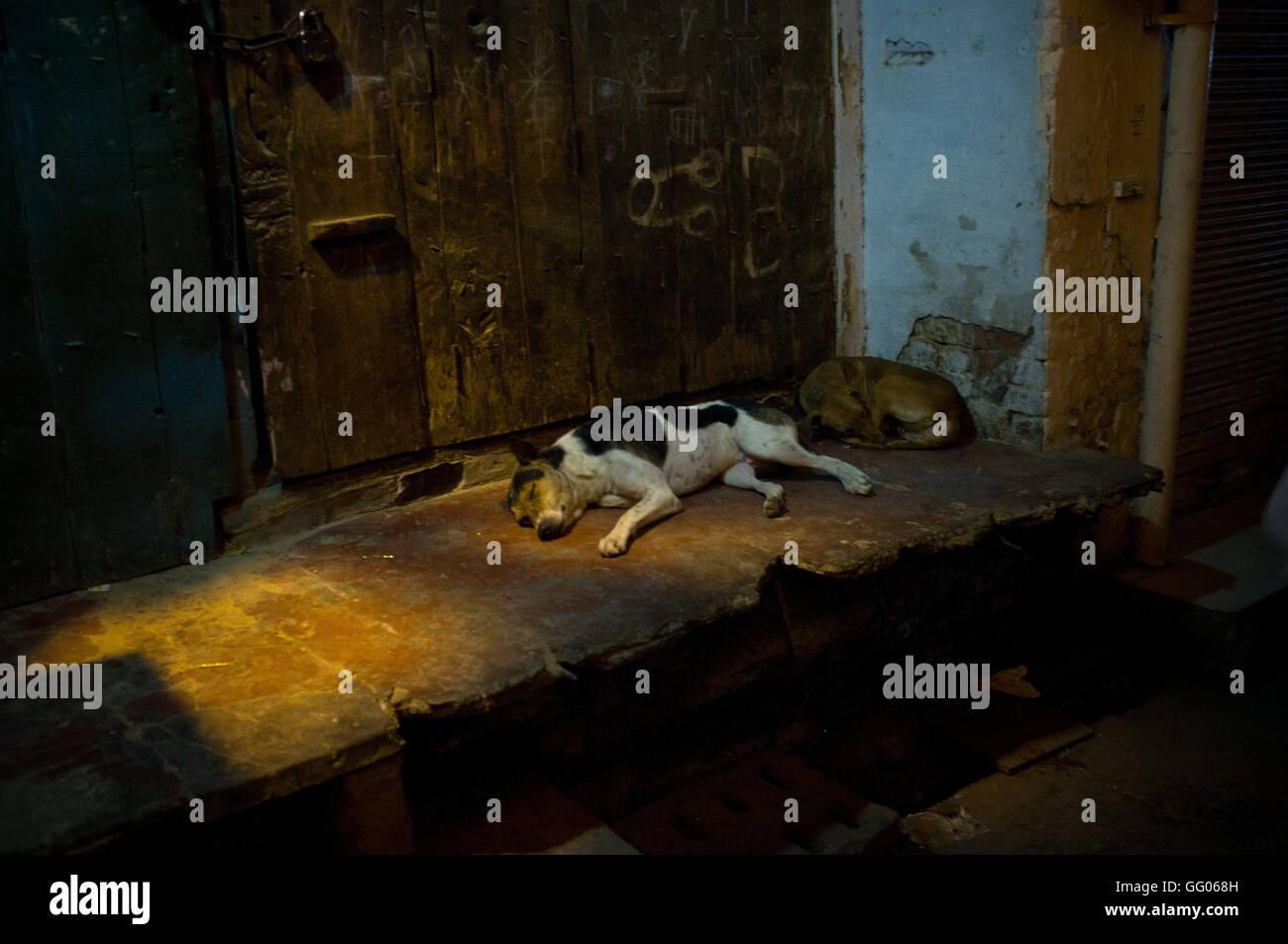 Amritsar, Punjab, en Inde. 12 mai, 2013. L'image de fichier - Les chiens dormir dans une ruelle d'Amritsar, en Inde. Banque D'Images