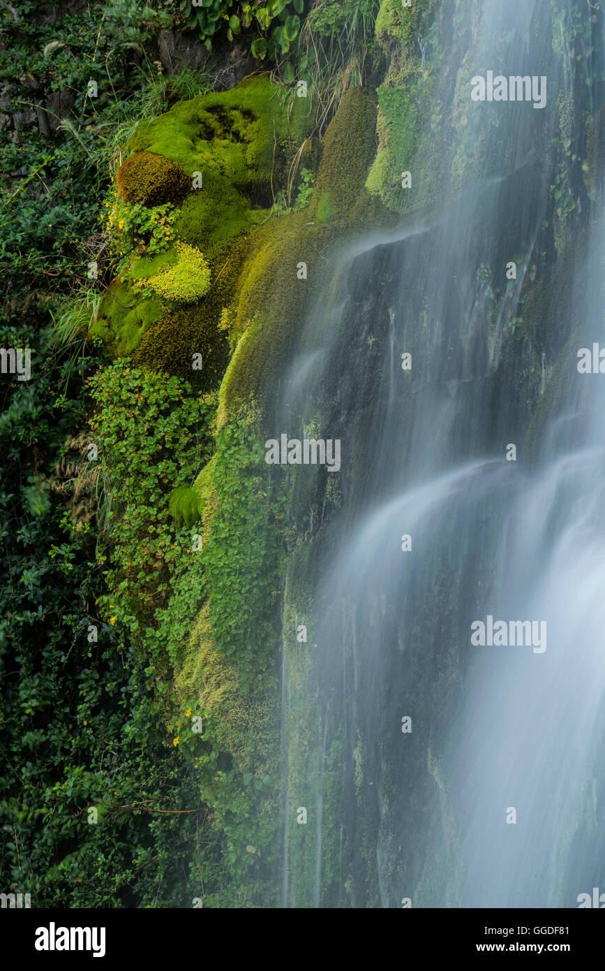 L'Amérique du Sud, Argentine, Patagonie, Rio Negro, Esquel, Cascade, parc national Los Alerces Photo Stock