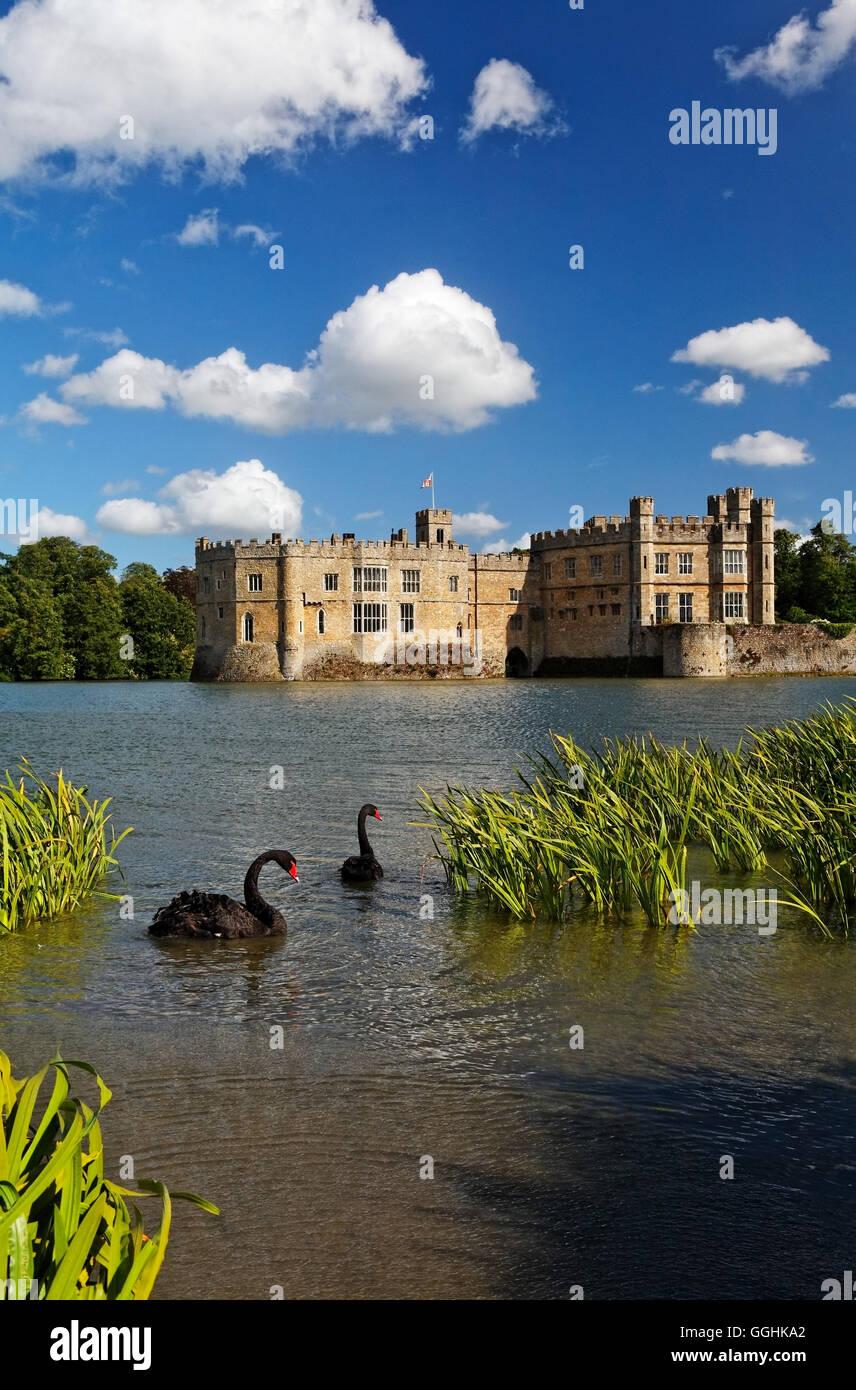 Les cygnes noirs sur un lac, le château de Leeds, Maidstone, Kent, Angleterre, Grande-Bretagne Photo Stock