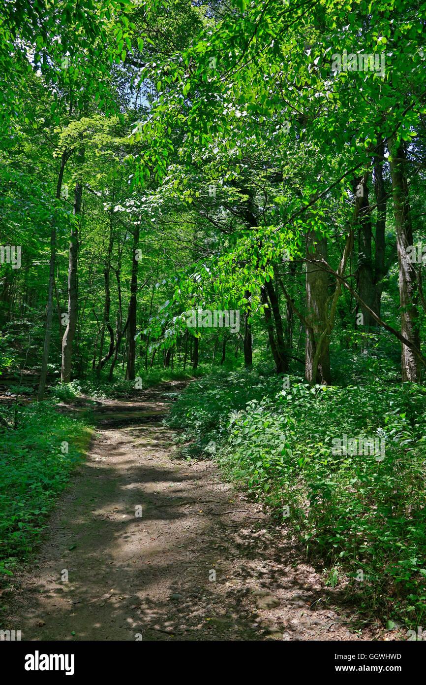 Route de campagne et le Virginia woods près de Roanoke Photo Stock