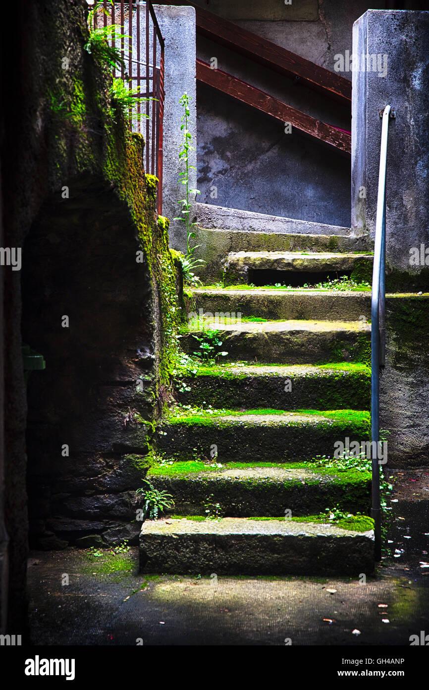 Escaliers couverts de mousse caché dans une cave à vin Photo Stock