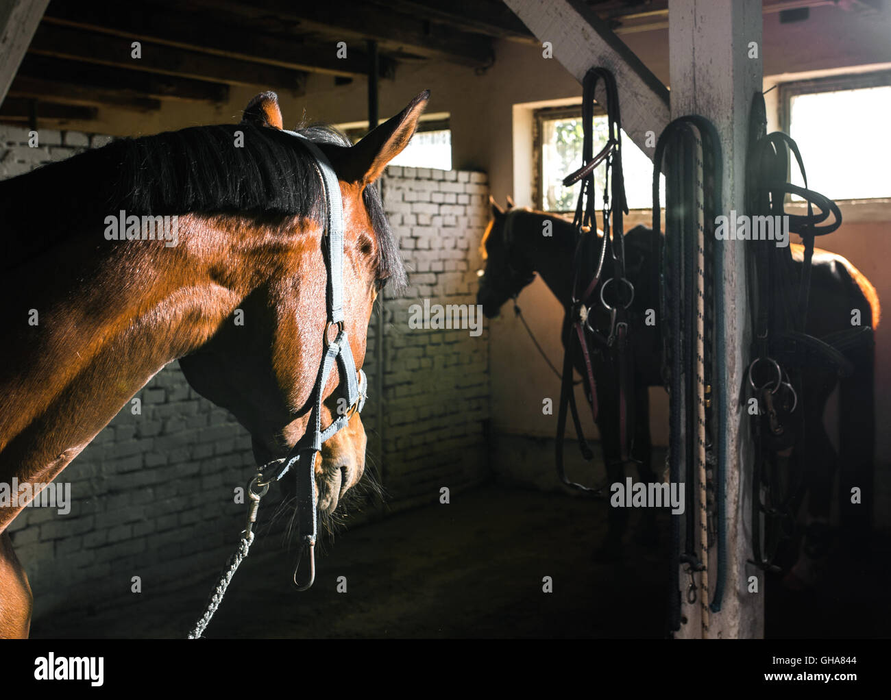 Portrait de cheval dans l'étable Photo Stock