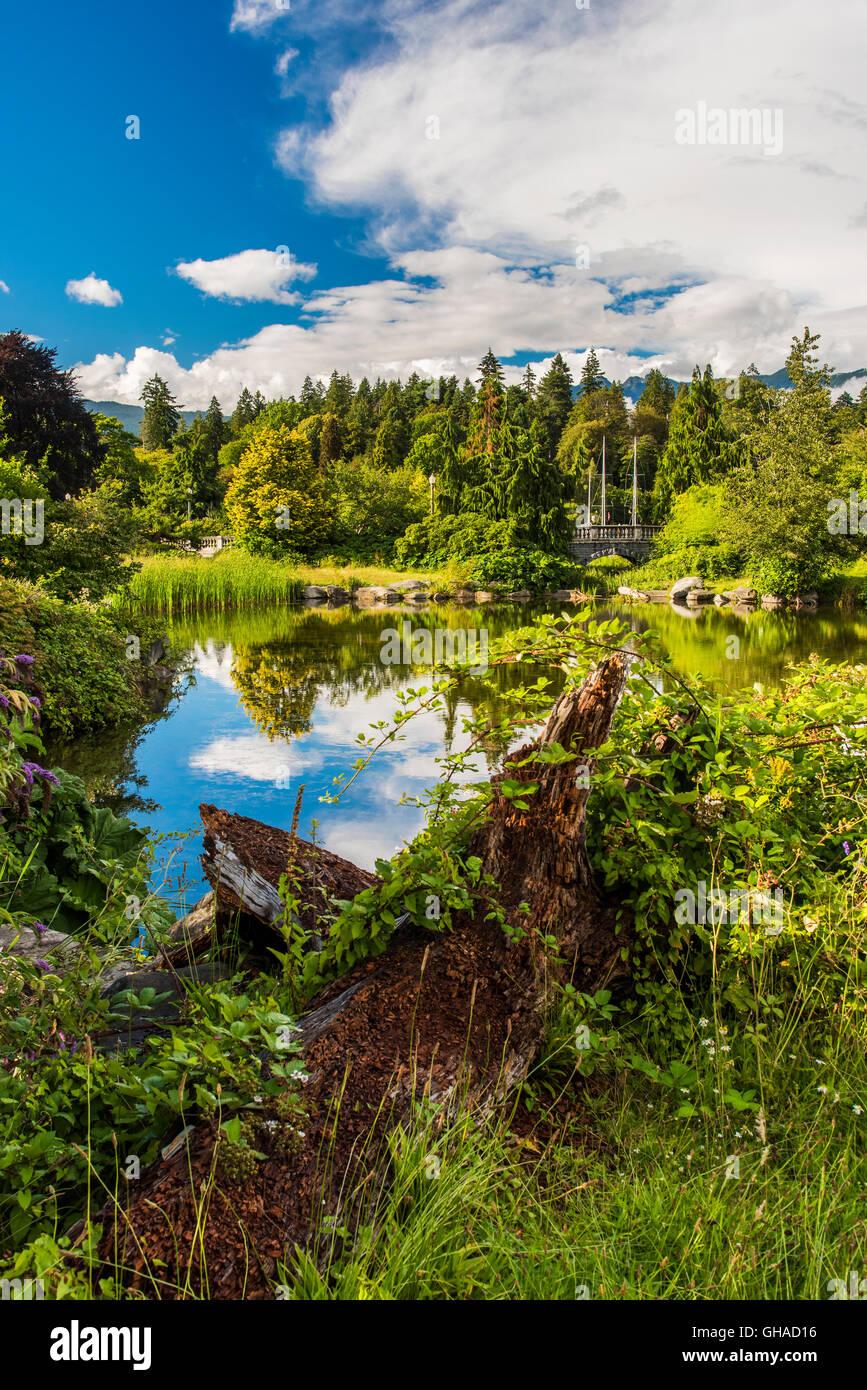 Le parc Stanley, Vancouver, British Columbia, Canada Photo Stock