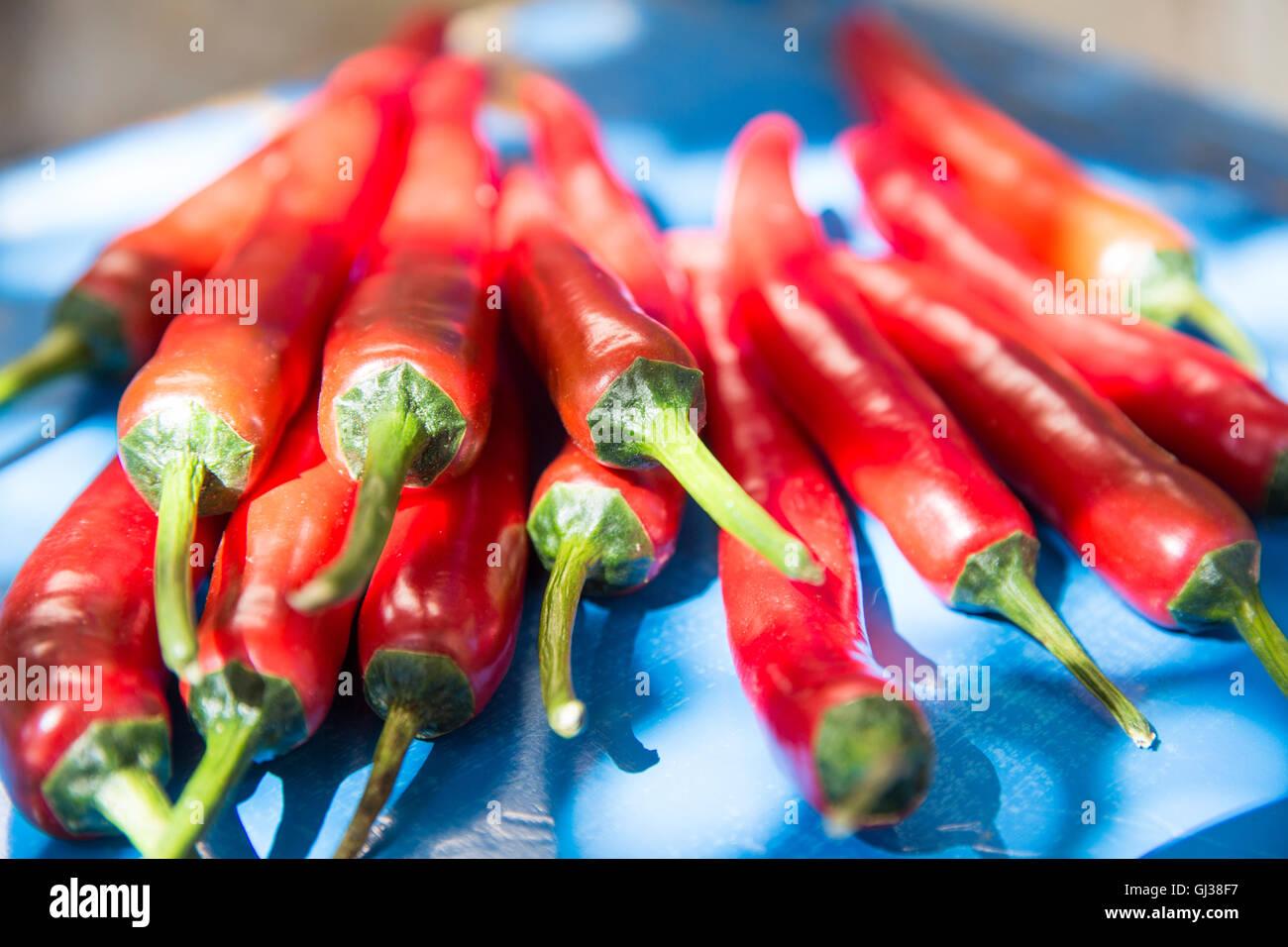 Groupe moyen de piments rouges frais Photo Stock