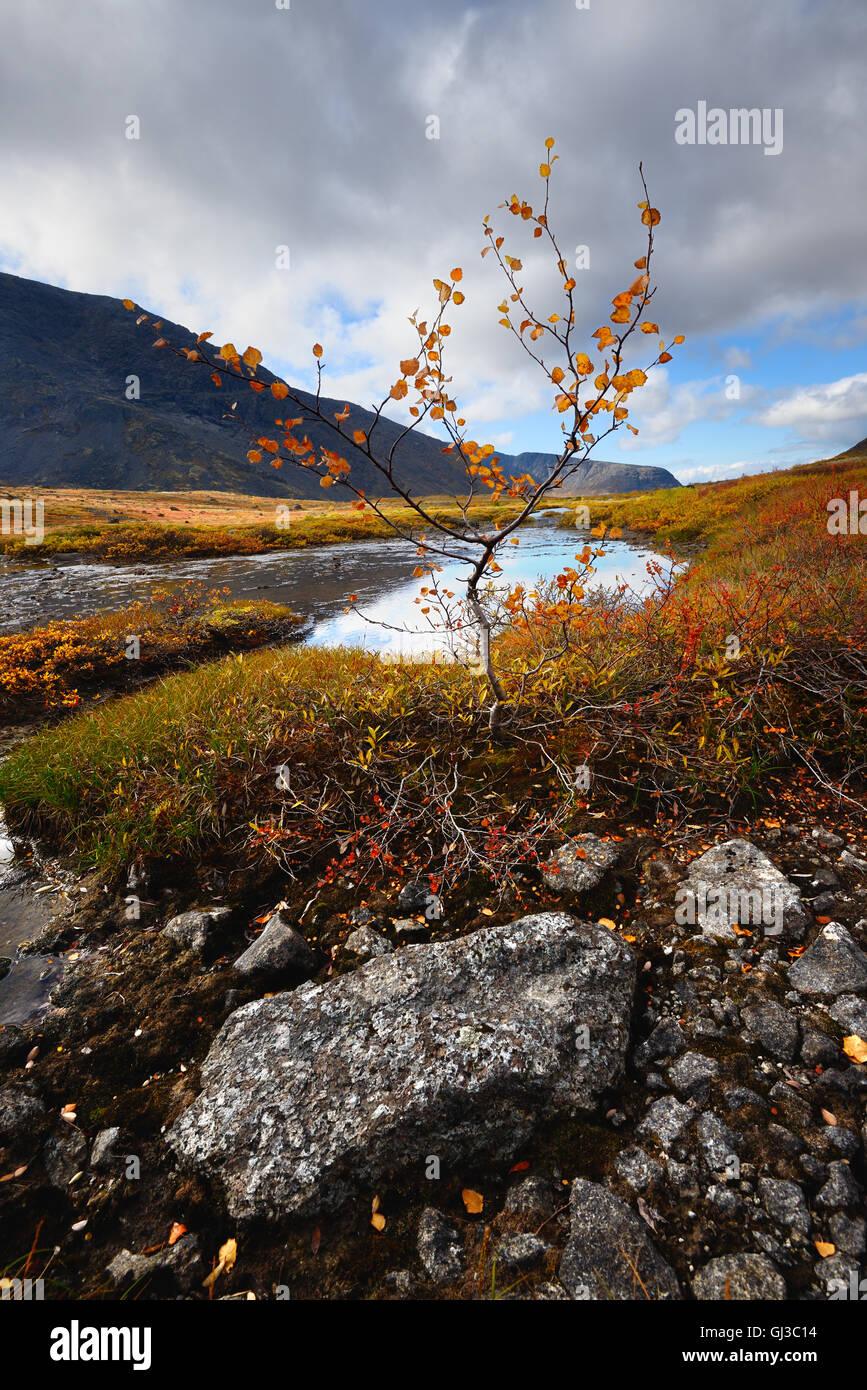 Couleur d'automne vallée à Malaya Belaya Rivière, montagnes Khibiny, péninsule de Kola, Photo Stock