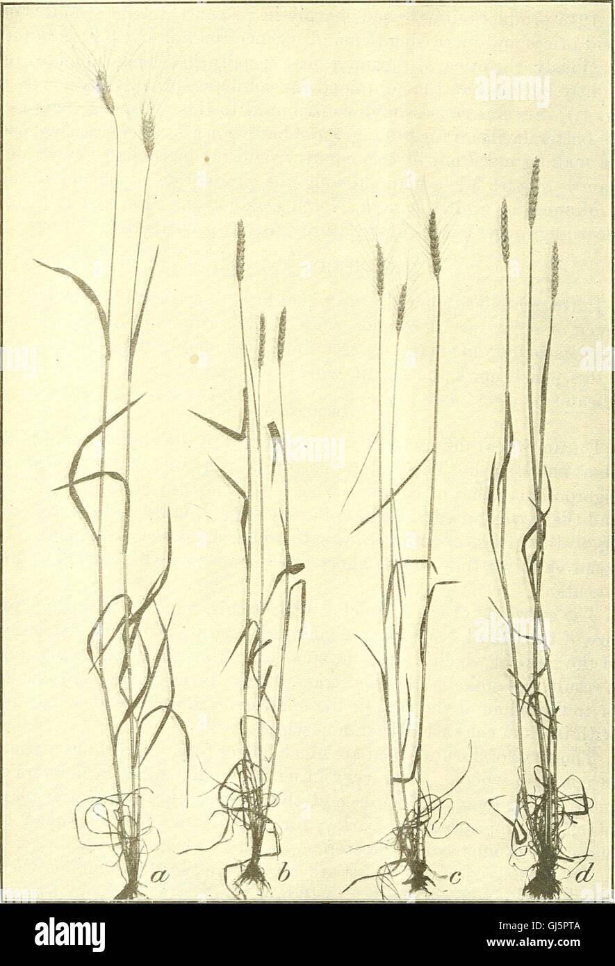 Bulletin du Ministère de l'Agriculture des États-Unis (1920) Banque D'Images