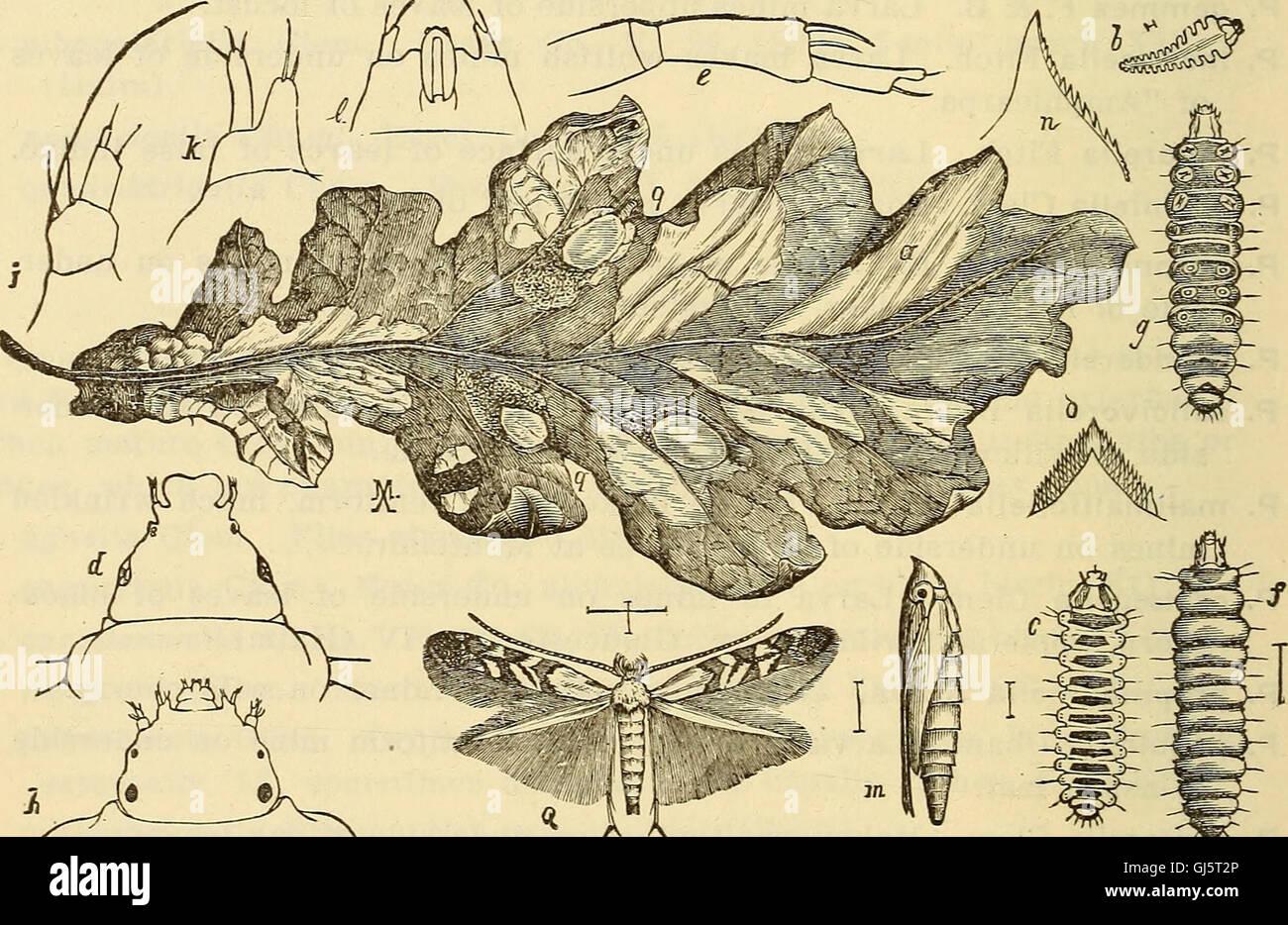 Rapport annuel, y compris un rapport des insectes du New Jersey, 1909 (1910) Banque D'Images