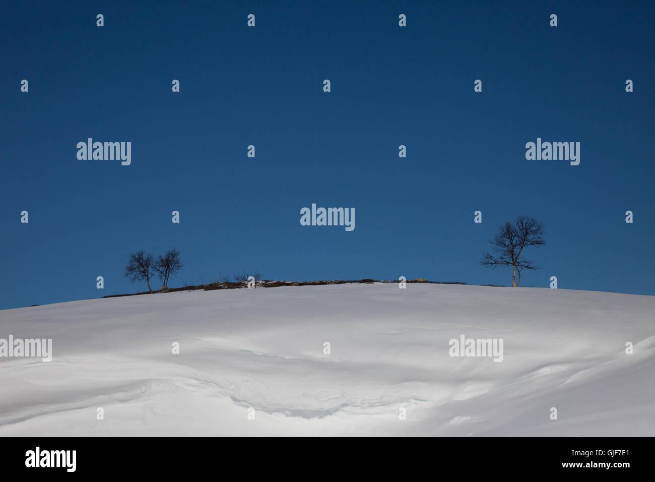 Ligne d'horizon avec arbre en Funasdalen, Suède, Europe. Photo Stock