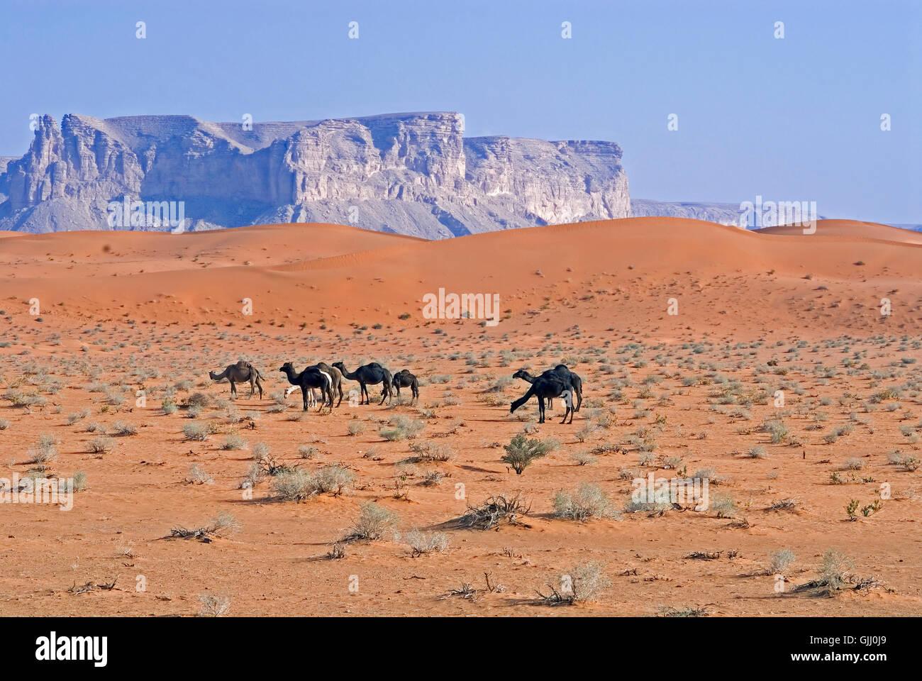 Sables Rouges,l'Arabie saoudite Photo Stock