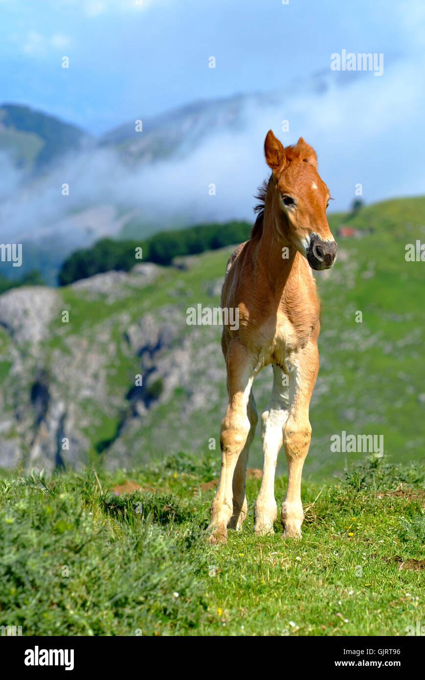 Tendresse cheval colt Photo Stock
